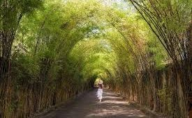 Bali Heritage Bamboo Forest Tour